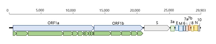 그림 1. 코로나 바이러스의 전에 유전체 구성도