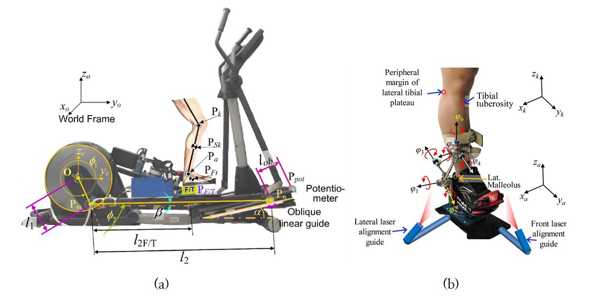 개발된 무릎관절염 진단 및 재활훈련 로봇 시스템. (a) 관절염 환자(오른쪽 다리)가 올라탄 무릎관절염 진단 및 재활훈련 로봇 시스템 측면(정중면; sagittal plane)도. 무릎관절염 진단 및 재활 로봇 시스템은 발판 밑의 6축 힘센서(PF/T)로부터 재활로봇시스템 위에서 걷는 동안 발에 걸리는 힘을, 앞쪽의 가변저항(potentiometer)으로부터 발판의 위치 및 기울어진 각도를, 그리고 발목에 착용하는 6자유도 각도기(그림 (b)의 goniometer)로 발판에 대한 하퇴부의 움직임을 측정한다. 이러한 측정데이터로부터 생체역학을 통하여 무릎 관절에 걸리는 모든 방향의 힘과 회전 힘을 계산한다.