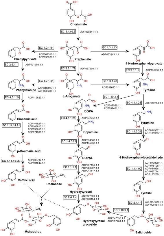 인포보스의 MetaPre-AITM을 활용한 미선나무 옥황1호의 유전체 데이터 기반 액티오사이드 생화학합성과정 분석 결과(이미지:인포보스)