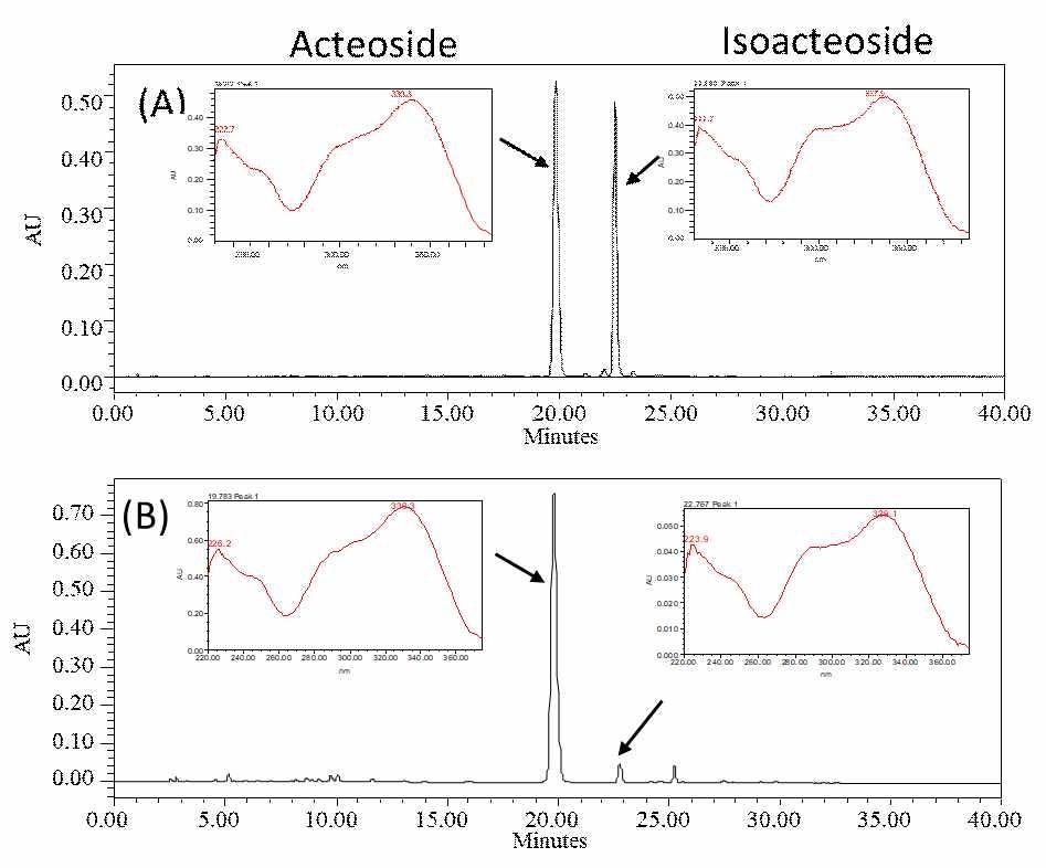 HPLC를 사용하여 미선나무 옥황 1호의 캘러스에서 액티오사이드 및 아이소액티오사이드를 검출한 결과(이미지:인포보스)